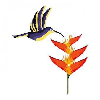 Flor do pássaro do colibri tropical