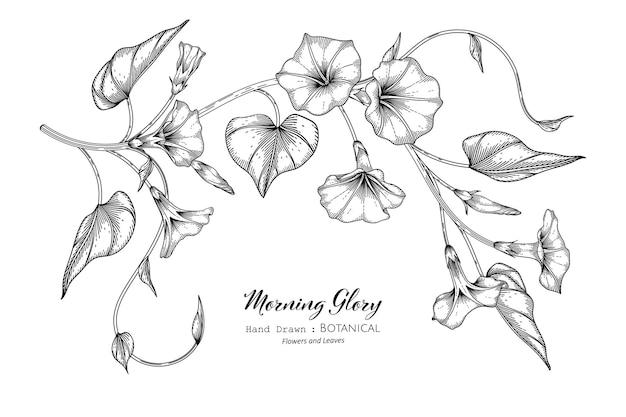 Flor e folha da ipomeia mão desenhada ilustração botânica com arte de linha.