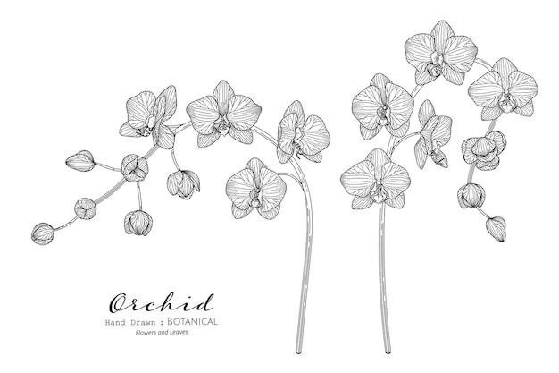 Flor e folha da orquídea mão desenhada ilustração botânica com arte de linha.
