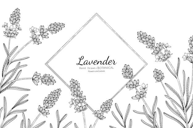 Flor e folha de lavanda mão desenhada ilustração botânica com arte de linha.