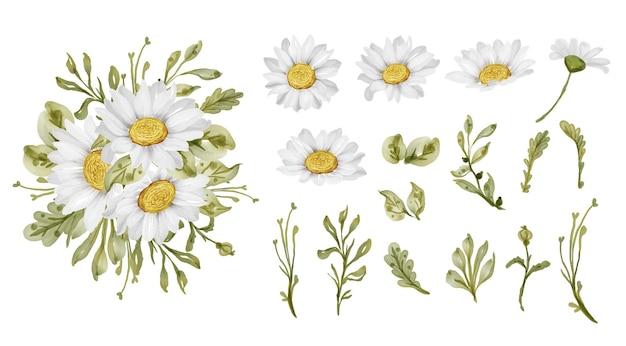 Flor elegante e linda margarida branca isolada