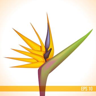 Flor exótica de vetor de strelitzia laranja