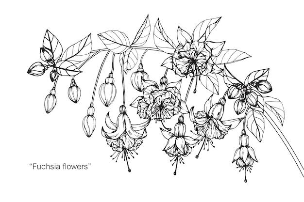 Flor fúcsia desenho ilustração
