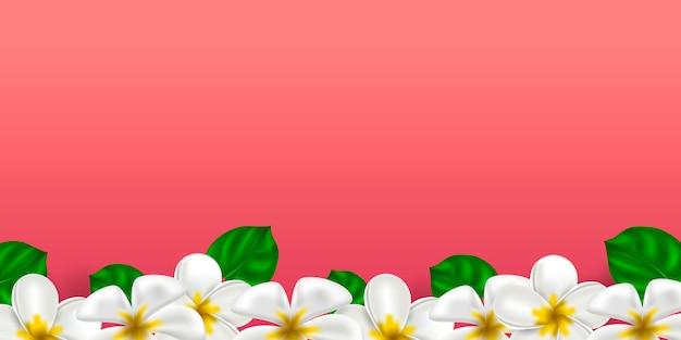 Flor havaiana tropical plumeria