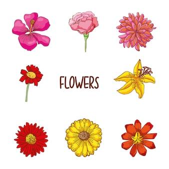 Flor mão desenhada conjunto isolado sobre fundo branco.