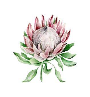 Flor prótea