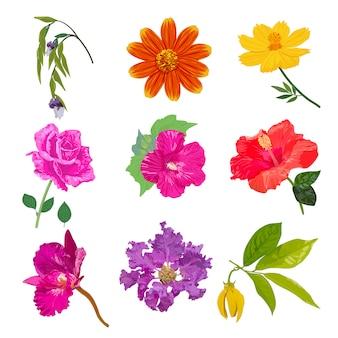 Flor realista colorido isolado conjunto de coleta