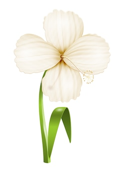 Flor realista isolada