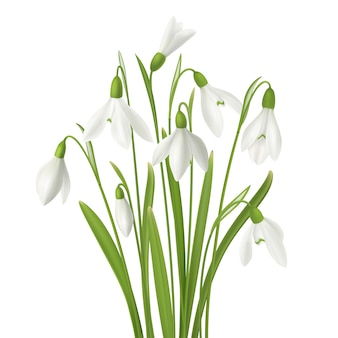 Flor realista snowdrop conjunto com ramo de flores frescas caules e imagens de grama na ilustração de fundo em branco