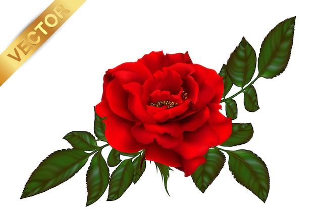 Flor rosa de planta desabrochando.