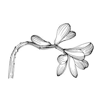 Flor suculenta, gravando ilustração vintage