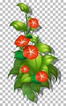 Flor tropical e folha em fundo transparente