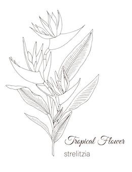 Flor tropical isolada no branco