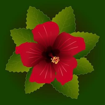 Flor vermelha de hibisco e fundo de folha verde