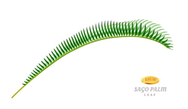 Flora exótica e vegetação isolada curvatura folha de sagu palma folha decorativa de árvore tropical