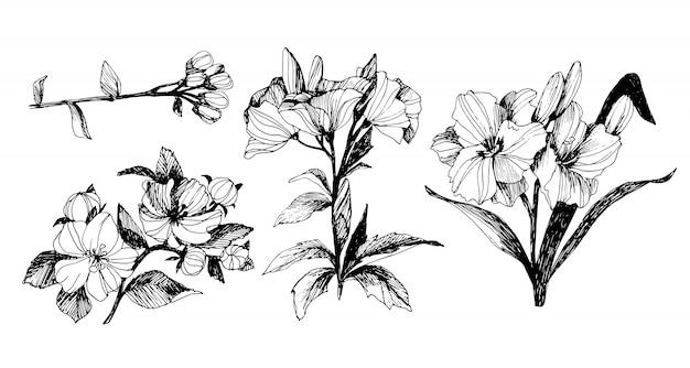 Floral conjunto com peônias e folhas, botões de flores. gráficos vintage lineares. esboço.
