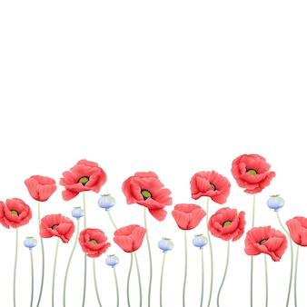 Floral, fundo, com, papoula, flor
