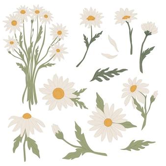 Flores amarradas em buquê, ícones isolados de camomila em flor