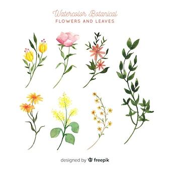 Flores botânicas e folhas