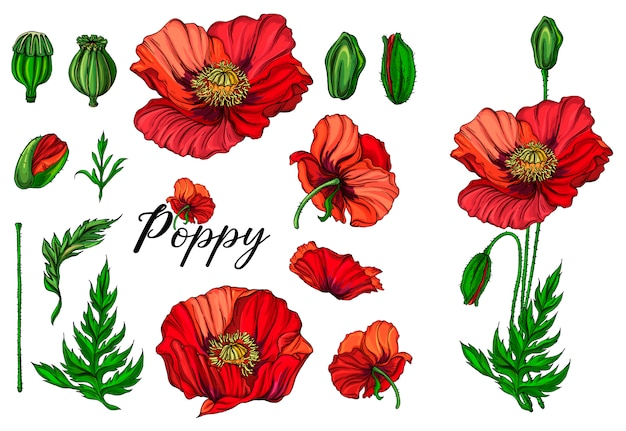 Flores brilhantes de cor de vetor,