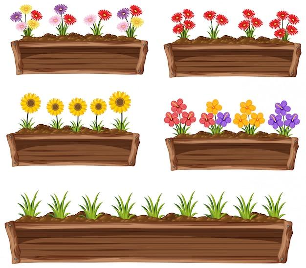 Flores coloridas em panela de madeira no fundo branco