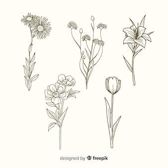 Flores com hastes mão desenhada coleção