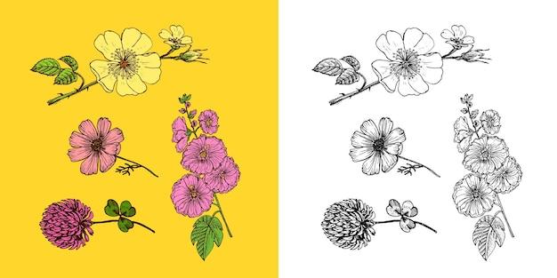 Flores com narcisos e orquídeas com folhas e botões e jardim botânico ou planta de casamento com lírios