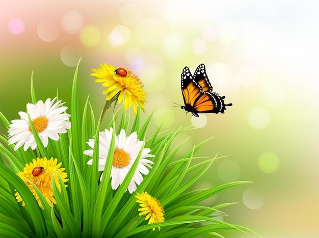 Flores da margarida de verão natureza com borboleta. ilustração vetorial