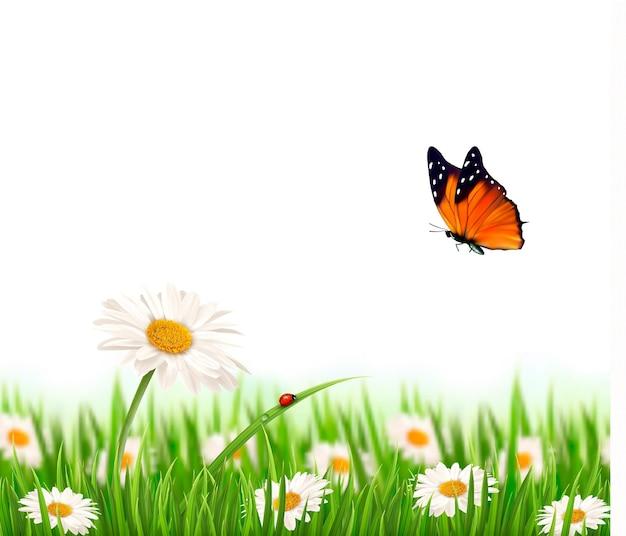 Flores da margarida de verão natureza com borboleta. ilustração.