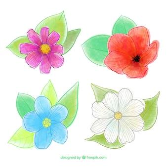 Flores da primavera colecção