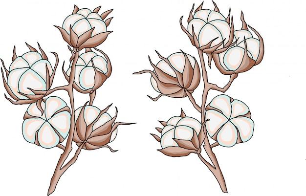 Flores de algodão ramos ilustração vetorial