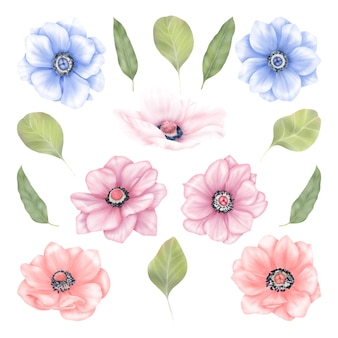 Flores de anêmona de verão em folhas azuis, rosa e verdes