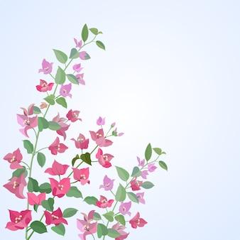 Flores de buganvílias vector design