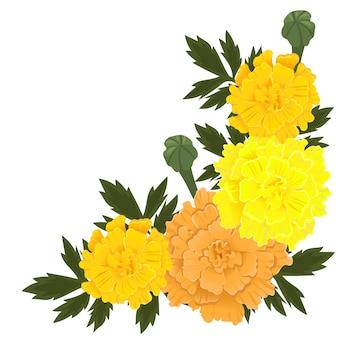 Flores de calêndula de cor amarela e laranja, isoladas no fundo branco.