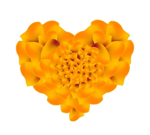 Flores de calêndula francês laranja em forma de coração