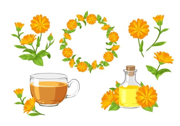 Flores de calêndula, grinalda, chá, óleo de calêndula e buquê