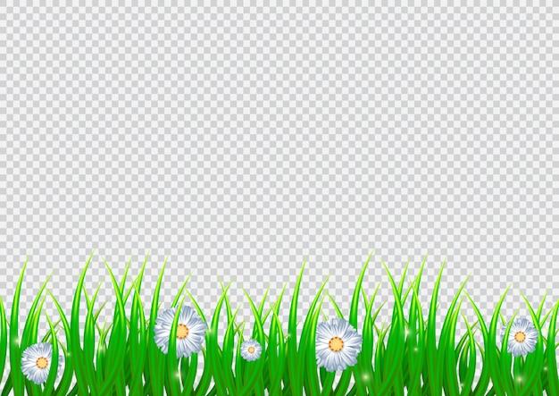 Flores de camomila e grama realista.