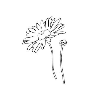 Flores de camomila uma linha de arte linha contínua de plantas erva flor flora camomila calêndula