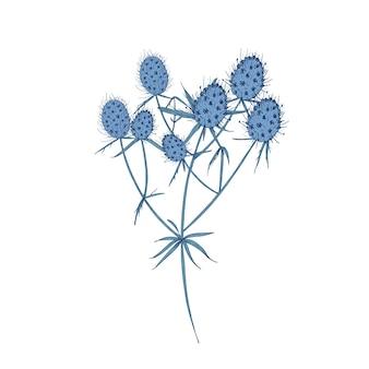 Flores de campo eryngo, caules e folhas isoladas