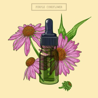 Flores de echinacea e conta-gotas de vidro verde