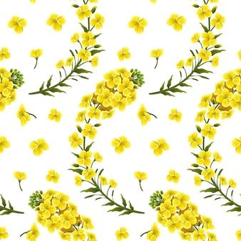 Flores de estupro de padrão, canola. brassica napus.