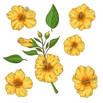 Flores de hibisco conjunto com folhas. isolado