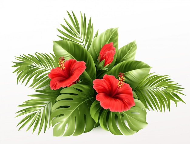 Flores de hibisco tropical exóticas e folhas de monstera, folhas de palmeira de plantas tropicais em fundo.