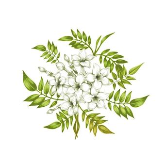 Flores de jasmim de vetor.