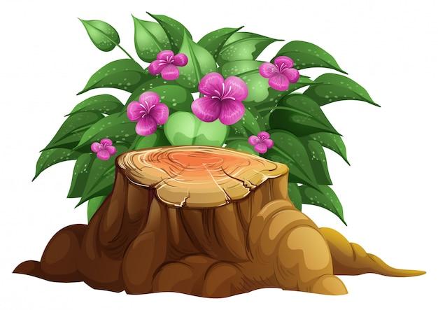 Flores de lírio puprple com folhas