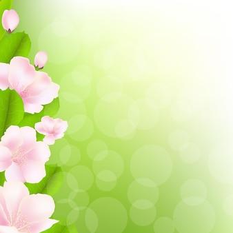 Flores de macieira com bokeh