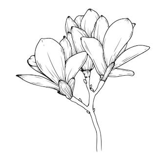 Flores de magnólia