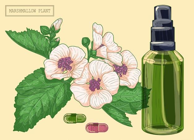 Flores de marshmallow medicinal e pulverizador de vidro verde, ilustração botânica desenhada à mão em um estilo moderno e moderno
