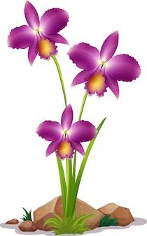Flores de orquídea roxas