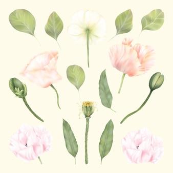 Flores de papoula branca e rosa de verão, folhas verdes, decoração floral